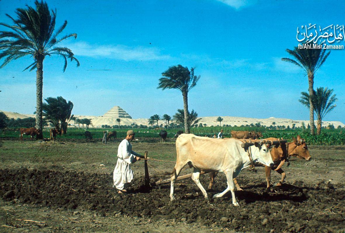 ägypten geld einreise